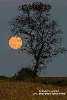 Super Moon and a Lone Tree